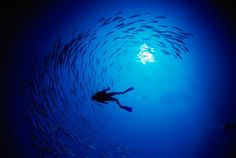 the only place in the world where i feel completely at peace: breathing underwater.