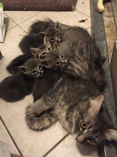 Mom and 4 kittens