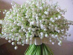 #Bruidsboeket met #lelietjes van dalen, echt is voor Rosa  Lilly! #bridal bouquet lilly of the valley.