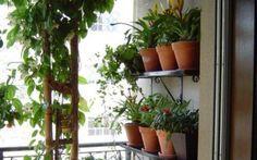 Apartamentos pequenos também podem abrigar hortinhas e jardins. Aproveite as paredes para isso