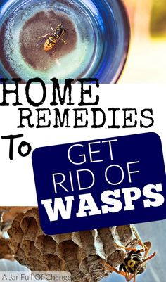Home remedies to get rid of wasps can save you a ton of money. Try these useful solutions at just a fraction of the cost of a professional.