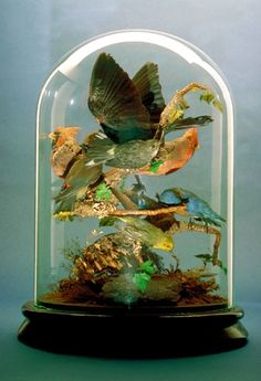 Victorian dome of exotic birds.