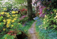 Leonadslee Gardens, Woodlands filled with many different flowers and flowing shubs,West Sussex, UK By: ukgardenphotos