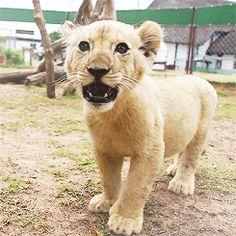 BOMBA: A Receita Federal não é feita apenas de leões do Fisco. Confira mais, CLIQUE NA IMAGEM...