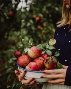 If you are looking for the best apple cider recipe to make for friends and family this fall or holiday, look no further. Apples Photography, Fruit Photography, Apple Farm, Apple Orchard, Orchard Lane, Apple Harvest, Fall Harvest, Best Apple Cider, Fall Vegetables