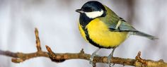 This Bird Could Actually Be Evolving to Eat From Bird Feeders Adapting to modern times.