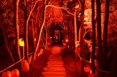 RISE of the Jack O'Lanterns at Old Westbury Gardens.  Another East Coast event I need to go to.