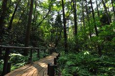 横浜市 環境創造局 自然~緑・花・農~ 市民の森 ウイトリッヒの森