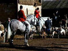 Blue Peter, Irish Draught stallion  (...not confirmed)