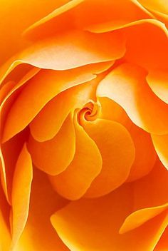 Georgia O'Keeffe created this stunning orange rose I love the colouring and the shading in this piece