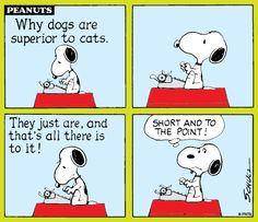 Cats and Dogs!
