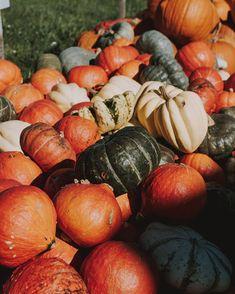 SARAH   Photographer (@fotografierende) • Instagram-Fotos und -Videos Enjoy It, Instagram Accounts, Pumpkin, Videos, Photography, Buttercup Squash, Pumpkins, Squash, Photograph