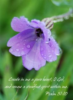 Purple Silene flower Print scripture photographic by NewCreatioNZ