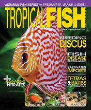 The February 2011 issue features an article on a gorgeous new import, panda loaches, the predatory, lightning-fast mantis shrimp, setting up a Mediterranean biotope tank, setting up an aquarium for tetras and barbs, and much more!