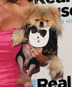 giggy the star of rhobh