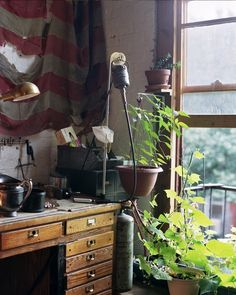 plants, flora, colors, vintage, antique, industrial, lamp