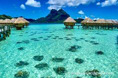Where is the best Bora Bora resort snorkeling? Bora Bora snokeling guide for finding the best resort snorkeling in Bora Bora from a resort beach or in a resort lagoonarium. Us Travel Destinations, Best Places To Travel, Places To Visit, Bora Bora Resorts, Bora Bora French Polynesia, Tahiti, Bora Bora Pictures, Pearl Beach Resort, Bora Bora Island