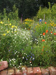 My dream yard, a Wild garden... ;)
