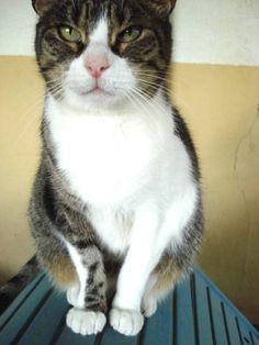 Helfende Hände e.V. - Katze Tara (EKH ca. 8 Jahre) sucht ein Zuhause…