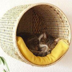 Oké, in de titel staat dan wel 'bedden voor je kat', maar eigenlijk zijn deze bedden de ideale slaapplek voor al jullie geliefde huisdieren. Behalve goudvissen misschien. Sorry goudvissen, vergeef ons… Bouwen maar! Mand op overschot? Makkelijker gaat het niet worden. Bevestig een stevige prullenmand of wasmand tegen de muur, leg er een zacht dekentje … Continued