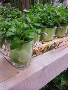 Munt plantje in theekopje Celery, Vegetables, Flowers, Plants, Food, Essen, Vegetable Recipes, Meals, Plant