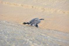 11 novembre 2013, Chale Kenya: ecco la prima che raggiunge il mare! (Foto di Paolo Bonvini)