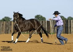 Groundwork Exercise #9: C-Pattern  Goal: To be able to walk in a straight line while sending the horse from one side of you to the other with energy, yielding his hindquarters on either side with only a look.  More about the exercise: https://www.downunderhorsemanship.com/Store/Product/MEDIA/D/253/