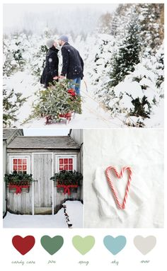 This color palette is all about a wintery Christmas feel with traditional candy cane red and pine green paired with fresh shades of sprig green and sky blue to put a slight twist on the traditional Christmas color palette. I love decorating with traditional decor and adding in bits of unexpected color.