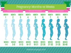 Pregnancy months Vs weeks.  I timeline of bumps #pregnancyfacts