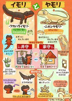 お前らが笑った画像を貼れ in 車板『これは豆知識認定?!』 Animal Paintings, Animal Drawings, Art Drawings, Animals And Pets, Cute Animals, Pokemon, Thing 1, Japanese Language, Watercolor Animals