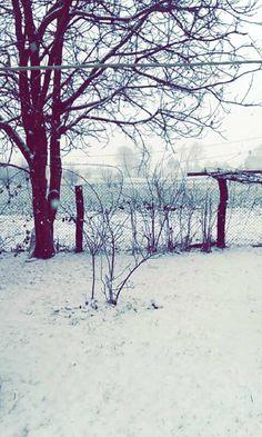snow. winter.