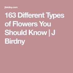 163 Different Types of Flowers You Should Know Unusual Flowers, Colorful Flowers, Different Types Of Flowers, Filet Crochet, Garden Art, Gardening Tips, Flora, Beautiful, Wood Path