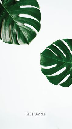 Oriflame Logo, Oriflame Beauty Products, Plant Wallpaper, Brand Book, Best Iphone Wallpapers, Instagram Highlight Icons, Background For Photography, Tropical Leaves, Lock Screen Wallpaper
