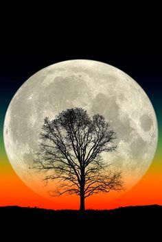 Big Tree - Big Moon - Most Beautiful Pictures Full Moon Rising, Moon Rise, Big Moon, Shoot The Moon, Lone Tree, Moon Pictures, Beautiful Moon, Natural Scenery, Amazing Nature