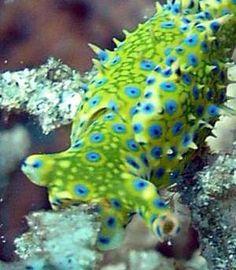 Nudibranch 351
