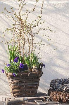 basket container garden
