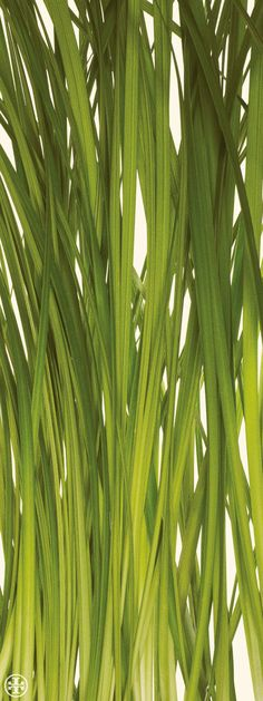 Vetiver, a signature scent of Tory's father