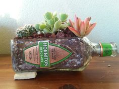 Hornitos Tequila Bottle Planter / Succulents cactus for sale by #LookingSharpCactus on Etsy