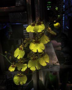 Orquídea #Medellín #Colombia #Flor