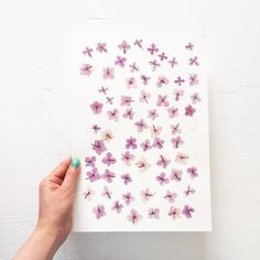 mr-studio-london-pressed-flowers-gardenista