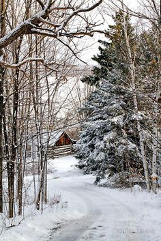 Snowy Road To The Barn.