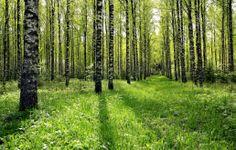 Metsä sijoituskohteena: Tämän verran voit tienata! - MTV.fi - Koti ...