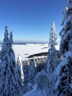 Tykkylumen peittämät puut tuovat mieleen Lapin maisemat. Kolin kansallispuistossa pääsee patikoimaan myös talvella.