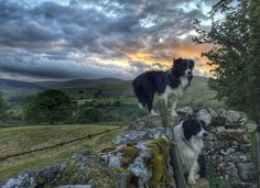 """Twilight drops her curtain down, and pins it with a star. "" ~Lucy Maud Montgomery. OBE Photo: Evening walks, Cumbrian Fells Cumbria, by Alison O'Neill."