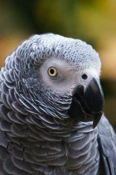 Download this free photo from Pexels at https://www.pexels.com/photo/animal-avian-beak-bird-531495/ #bird #animal #cute