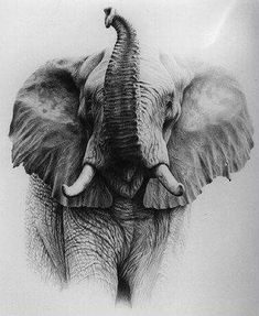 Alan Ainslie - South African Wildlife artist and illustrator Wildlife Paintings oil/acrylic watercolour pastel or pencil leopard lion nyala elephant Realistic Elephant Tattoo, Elephant Tattoo Design, Elephant Tattoos, Animal Drawings, Cool Drawings, Pencil Drawings, Elephant Drawings, Elephant Sketch, Elephant Paintings