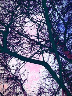 photos d'arbre modifié avec l'application pour iphone,ipad,ipod:Repix Application Iphone, Ipod, Abstract, Artwork, Nature, Photos, Animaux, Summary, Work Of Art