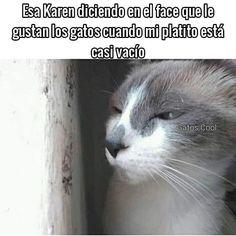 """205 Me gusta, 2 comentarios - Gatos Cool (@gatoscooloficial) en Instagram: """". . . #gatoscool😸 #memesdegatoscool #gatos_cool #gatos #gatitos #lahipocresía #hipocrita…"""""""