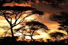 Photo : Coucher de soleil en Tanzanie,  Couchers de soleil, Tanzanie. Toutes les photos de michel DAVID sur L'Internaute