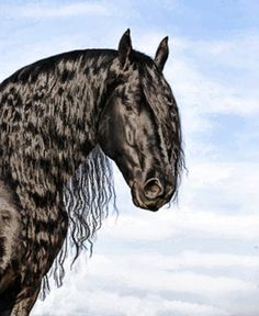 Friesian Horses from Friesland, Netherlands. Someday I will go there and research my roots.
